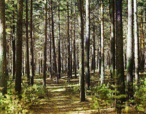 16 сентября - День работников леса и лесоперерабатывающей промышленности