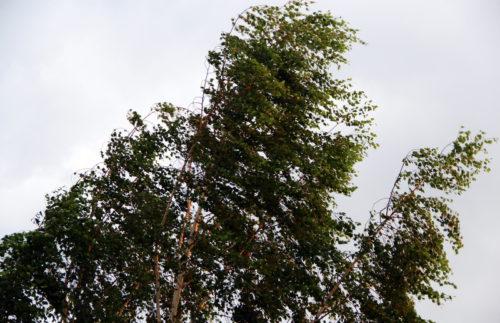 Синоптики предупреждают об усилении ветра 12 сентября