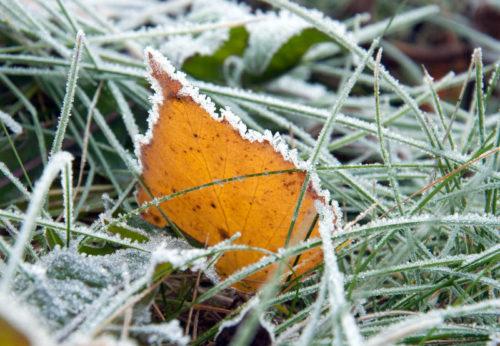 Синоптики предупреждают о заморозках