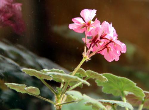 Зимой и летом порадует цветом