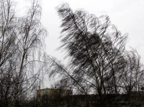 Синоптики предупреждают об усилении северного ветра