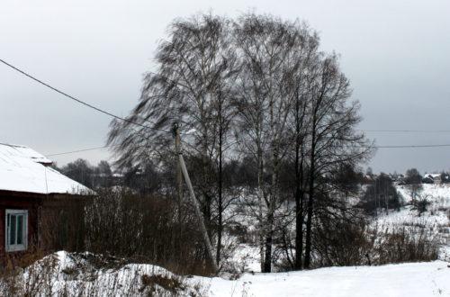 Синоптики предупреждают: ожидается усиление ветра