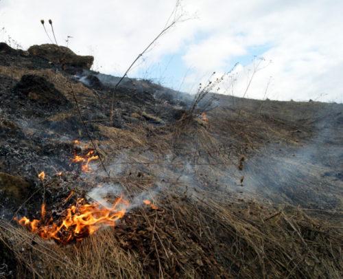 Жителям Тверской области напоминают правила безопасности в пожароопасный период