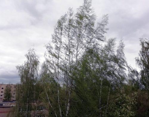 МЧС: ожидается усиление ветра
