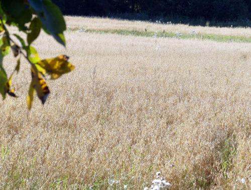 Льняное поле просит поддержки