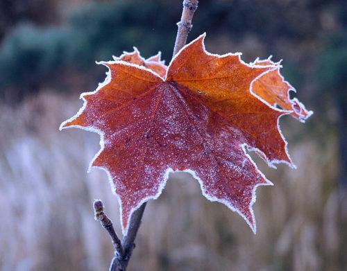 Синоптики предупреждают: заморозки и ветер