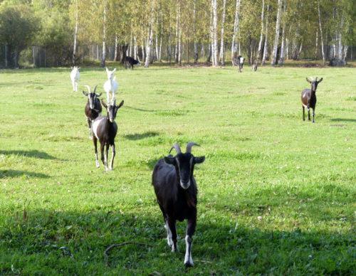 Агронавты из Брызгалова