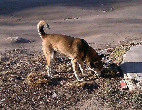 Что делать с безнадзорными собаками?