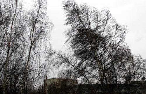 Синоптики предупреждают: 16 февраля ожидается усиление ветра