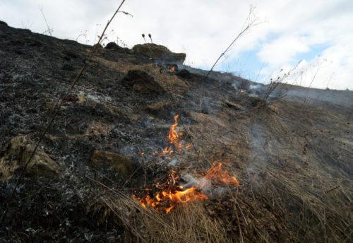 В Тверской области с 1 апреля вводится особый противопожарный режим