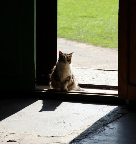 Кошачий «собес»