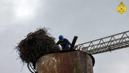 Каждая жизнь важна: сотрудники МЧС спасли аистов