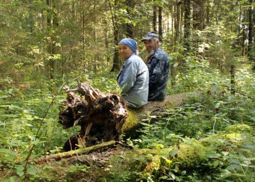 Царство лесной стрекозы
