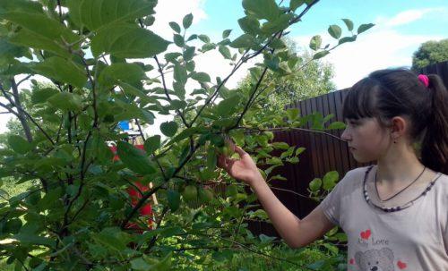 В Луковникове вырастили «Урожай-2020»