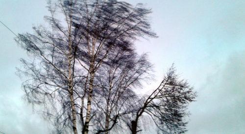 Днём 12 марта ожидается усиление ветра