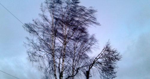 В воскресенье ожидается усиление ветра