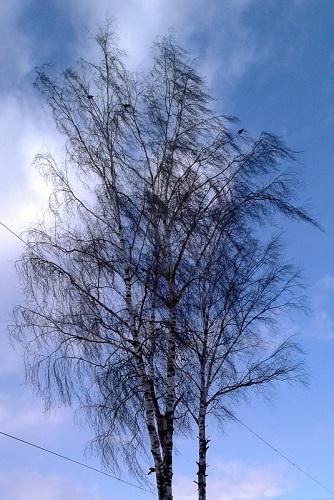 Ветер усилится