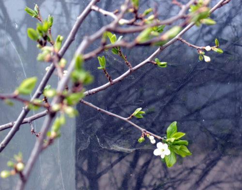 В ожидании весенней метели…