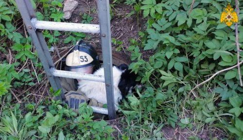 В Старице сотрудники МЧС спасли собаку, провалившуюся в канализационный люк