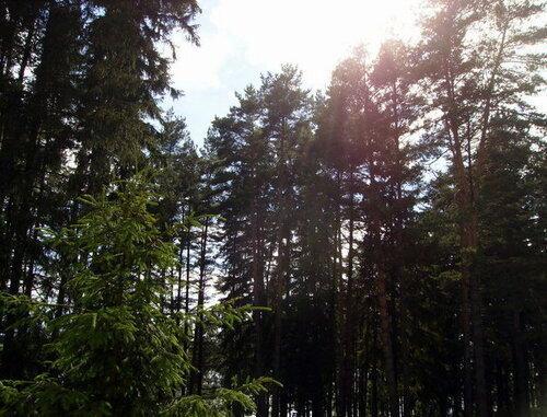 Введены ограничения на посещения лесов