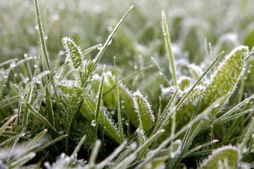 Синоптики предупреждают о возможных заморозках