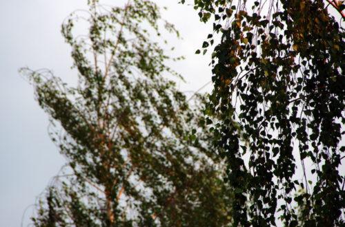 Синоптики предупреждают об усилении ветра