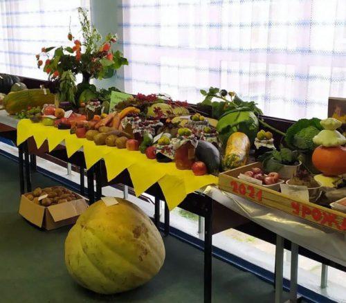 Юные агрономы и ландшафтные дизайнеры: школьники из Старицкого района стали победителями регионального конкурса