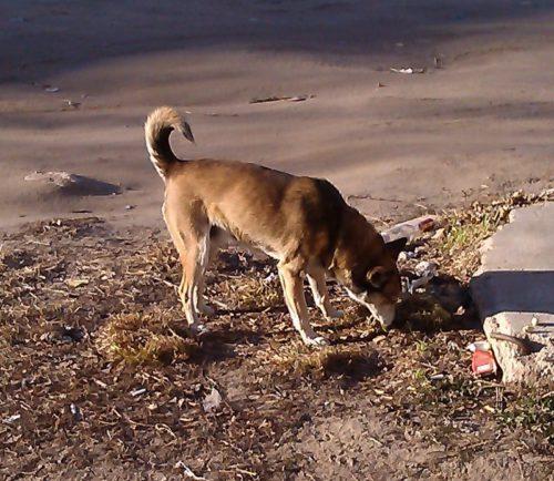 В Тверской области внедряется новая система обращения с безнадзорными животными